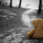 Urso solitário