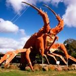 Lagosta gigante na Austrália